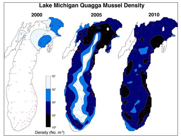 Quagga Density